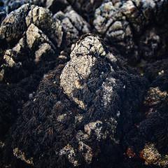 (Con Ryan) Tags: rock seaweed