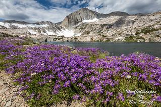 North Peak Wildflowers