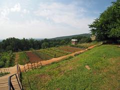 Monticello Gardens (LebronPhoto) Tags: olympusomdem1 olympusomd lebronphotography lebronphoto lebron 7artisans75mmf28fisheye monticello thomasjefferson charlottesville virginia