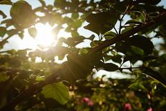 manhã (shadesinyou) Tags: green sun cachoeira bahia 2018