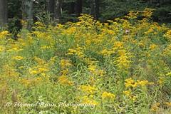 Endless Mountains (68) (Framemaker 2014) Tags: endless mountains sullivan county forkston pennsylvania northeast united states america flower