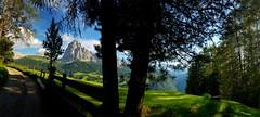 Green World - 20180707_181923 m5(1) (maxo1965) Tags: green world landscape dolomites seceda sassolungo langkofel grödnertal valgardena südtirol summer hiking path trees mountain