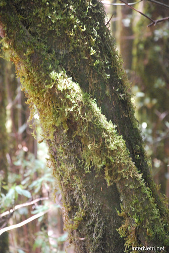 Національний парк Гарахонай, Гомера, Канарські острови  InterNetri  0714