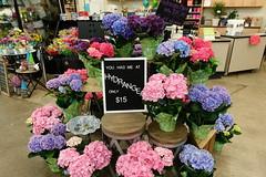 Hyvee in Cedar Rapids 6-30-18 01 (anothertom) Tags: cedarrapidsiowa hyvee grocerystore shopping flowers floral hydrangeaplant sign display 2018 sonyrx100v