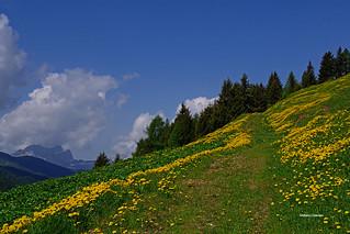 Camminare in una valle gialla