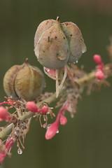 After the Rain (lars hammar) Tags: raindrops yucca