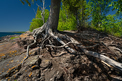 Weathered Tree Roots 20180705-DSC07853 (Rocks and Waters) Tags: 1807xxnorthshore batis225 blue greatlakes lakesuperior sugarloafcove tree zeiss a7r2 batis green landscape roots sky sony water