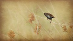 Discovering the World (Christina's World Off and On) Tags: bird textures painterly wildflowers field baby sparrow sandiego nature pastels pastel minimalism