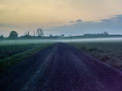 The Fog (Mikael Langer) Tags: 6x45 analog c41 colornegative film kodakportra160nc mamiya645super mediumformat selfdeveloped