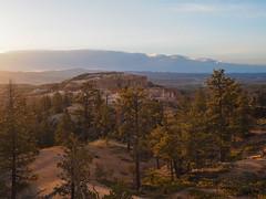 Golden Hour, Bryce Canyon National Park Utah (netbros) Tags: brycecanyonnationalpark utah queensgardentrail peekabocanyon goldenhour netbros internetbrothers
