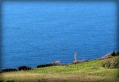 Cilento Vigna a mare (52picchio) Tags: campania canon cilento castellabate canonixus155 explore explored santamariadicastellabate spiaggia puntatresino estate fluidrexplored fluidr flickr flickrclickx flickrnova mare