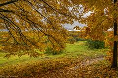 October gold / Золото октября (Vladimir Zhdanov) Tags: autumn october nature landscape sky cloud russia moscow tsaritsyno park forest tree leaf grass field