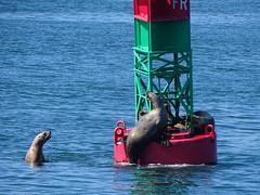 DSC03643 (jrucker94) Tags: juneau alaska cruise cruiseport seal seals buoy ocean inlet red green