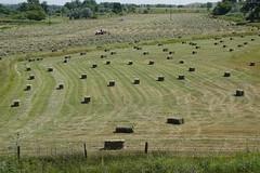 Building bales (Let Ideas Compete) Tags: hay agriculture farming rural ruralscene farmlife