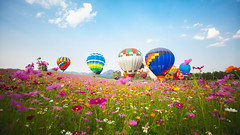 Hot air balloon over cosmos flowers filed (Patrick Foto ;)) Tags: agriculture air background balloon balloons beautiful blue cloud cloudy colorful country day farm field fields flower flowers fly grass green hot idyllic land landscape lawn meadow mountain natural nature outdoor outside over paradise pasture plant rural scene season sky spring summer transportation vibrant view weather yellow tambonmaekon changwatchiangrai thailand th