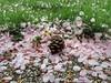 The Center of Things (Robert Cowlishaw (Mertonian)) Tags: pinecone mertonian robertcowlishaw naturestable springgathering canon powershot g1x mark iii canonpowershotg1xmarkiii spring pink green ineffable awe wonder beautiful beauty kneeling
