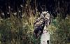 Regard immobile... ( P-A) Tags: beauté grandduc hibou plumage yeux parcoméga démonstration oiseaudeproie forêt photos simpa©