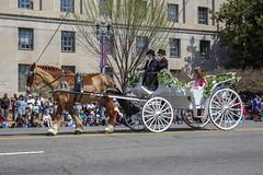 2018 National Cherry Blossom Parade  (987) Miss America, Cara Mund (smata2) Tags: missamerica bunny caramund washingtondc dc nationscapital cherryblossomfestival cherryblossomfestivalparade parade