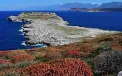 Tigani 4 (orientalizing) Tags: blossoms coast colorful desktop featured greece landscape latespring mani mountains naturalfortification panorama plants rugged seascape shore tayegetosmassif tigani tiganipeninsula