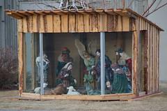 Nativity Scene (Bracus Triticum) Tags: nativity scene calgary カルガリー アルバータ州 alberta canada カナダ 12月 december winter 2017 平成29年 じゅうにがつ 十二月 jūnigatsu 師走 shiwasu priestsrun