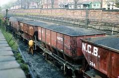 Westoe Erskine Bank top a684 (Ernies Railway Archive) Tags: hartoncoalcompany westoe ncb southshields