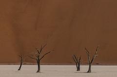 Family Gathering (Dany Eid) Tags: namibia desert deadvlei africa landscape sossusvlei tree nature travel abstract