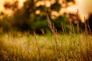 Sunsets & Tall Grass