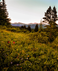 Shrine Pass, Colorado (BikeColorado) Tags: colorado sky meadow shrinepass morning flowers summer blooms wildflowers highmeadow evergreen spruce