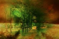 The dreamy way ... (Julie Greg) Tags: nature texture colours bird fujifilmxt20 fujifilm corn way park garden grass tree