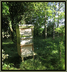 Shady Nook (M E For Bees (Was Margaret Edge The Bee Girl)) Tags: apiary apiculture garden sun summer shadows shade wooden trees green leaves canon countyside silverbirch betula patterns tranquility national hives