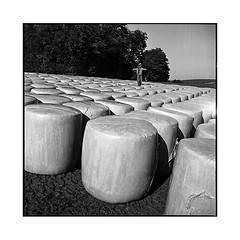 on guard • jura, france • 2016 (lem's) Tags: scarecrow epouvantail paille straw field champ jura france rolleiflex t