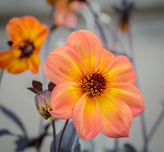 Spiecal Place. (Omygodtom) Tags: tamron90mm macro dof bokeh blur orange bright sunshine flower flora natural nikon d7100 usgs america