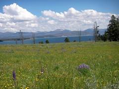 Yellowstone Lake (libra1054) Tags: yellowstonelake yellowstonenp wyoming usa landscapes paesaggi paisajes paisagens paysages landschaften