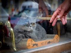 Wild cat © Inge Hoogendoorn (ingehoogendoorn) Tags: cat cats windowcat berlin berlijn kat katten poes poezen