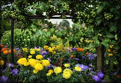 Hall Place Gardens (Jocelyn777) Tags: foliage green historicsites parksandgardens hallplace london england textured