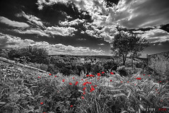 Poppies in the Night (fs999) Tags: 100iso fs999 fschneider aficionados zinzins pentaxist pentaxian pentax k1 pentaxk1 fullframe justpentax flickrlovers ashotadayorso topqualityimage topqualityimageonly artcafe pentaxart corel paintshop paintshoppro 2018ultimate paintshoppro2018ultimate roussillon roussillonenprovence provence vaucluse luberon france topaz labs bw effects 21bwfx21 bwfx2 bwfx21 cutout mask irixblackstone15mmf24 irix irixlens blackstone 15mm f24 blackstone15mm ultra wide angle nano circular polarising filter slim ultraslim coating