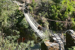 Flat on Track (Eye of Brice Retailleau) Tags: angle beauty composition landscape outdoor paysage perspective scenery scenic view extérieur travel river bridge pont puente vert green countryside campagne people scale hiking backpacking asia asie nepal annapurna trek