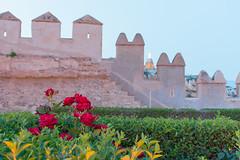Rosas en la Alcazaba (CrisGlezForte) Tags: rosas rojas almería alcazaba cerro de san cristóbal muralla