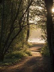 De bon matin **---+°--°° (Titole) Tags: sunrise path morning sunlight mist trees light sun bassindetrévoix trévoix 15challengeswinner thechallengefactory gamex2 challengegamewinner
