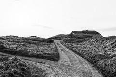 (Feininger's Cat (Thanks for 1.3 million views!)) Tags: meinfilmlab bessar3m summaritm50mmf24 film ilforddelta100 løkken jylland blackandwhite danmark scandinavia denmark jutland skandinavien analog still fullframe leicasummaritm12450 summarit summarit50 50mm leicam rangefinder messsucher