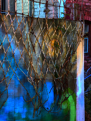 Untied (Steve Taylor (Photography)) Tags: untied unlaced graffiti fence building colourful metal rust wooden brick newzealand nz southisland canterbury christchurch city