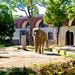 Female Asian Elephanti of Yokohama Zoological Gardens : アジアゾウ(よこはま動物園ズーラシア)