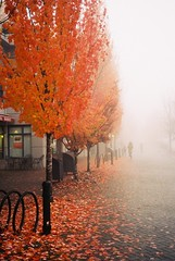 Canadian Autumn (mmaslyuk) Tags: fallcolours fog autumn fall sfu burnaby vancouver kodak400 400 ultamax kodak a35f canonet rangefinder canon photography film analog