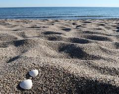 Muschel Paar (*AdeCo*) Tags: muscheln shells paar pärchen love liebe liebespaar duo sand sandkörner quarzsand beach ocean ozean meer strand strandsand maritim nature einsamkeit ruhe stille g7xm2 g7xii