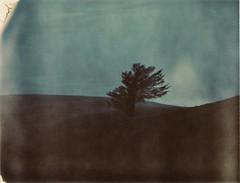 Solitude. (caballosblancos) Tags: film solitude solitary expired polaroidweek roidweek tree polaroid