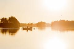 rowing on alke at sunset time (VisitLakeland) Tags: finland lakeland summer auringonlasku backlight boat ilta järvi kesä lake luonto maisema nature outdoor outdoors rowing scenery soutaa sunset vastavalo vene water