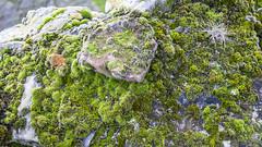 Tantallon Castle (Hans van der Boom) Tags: holiday vacation unitedkingdom uk scotland eastlothian tantallon castle northberwick coast lichen moss stone green