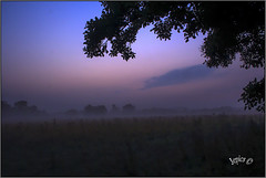 The First Light.  Part 1.. (Picture post.) Tags: landscape nature green mist sunrise summertime tree silhouette thistles fields sheep clouds bluehour goldenhour paysage arbre brume