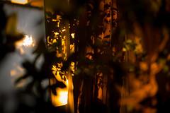 afterglow (_foam) Tags: be brussel brussels bruxelles bruxxel brüsel colour light plants reflection shadow sunset iso160 ¹⁄₃₀sec ¹⁄₃₀secatf14 leicasummiluxm35mmf14asph leicam9 f14