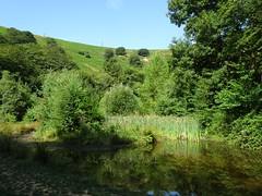 Artificial Pond, Blaen Bran, Upper Cwmbran 19 July 2018 (Cold War Warrior) Tags: blaenbran pond cwmbran